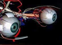 Tekniskt avancerade ögonglober royaltyfri bild