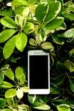 Teknologi i natur 2 Fotografering för Bildbyråer