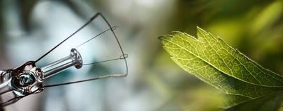 Teknologi vs natur för mänsklig moder för abstructbakgrundsframsida naturlig Arkivfoton