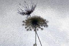 teknologisk abstrakt bakgrund Royaltyfri Foto