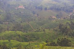 Tekolonier på Kandyen till den Ella drevresan - Sri Lanka royaltyfri foto
