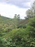 Tekolonin terrasserar i Malaysia royaltyfria foton