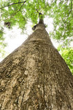 Tekowa drewno barkentyna Zdjęcie Stock