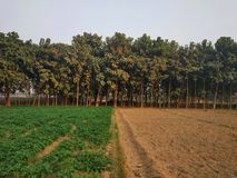 Tekowy drzewo ogród zdjęcie stock