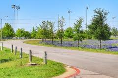 Teksas Bluebonnet kwiat fotografia stock
