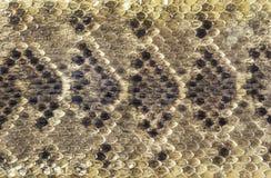 Teksas Diamondback brzęku węża skóra obraz stock