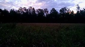 Teksas dziki Fotografia Stock