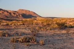Teksas pustynia Zdjęcia Stock