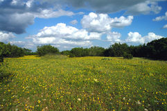teksas wildflowers obrazy stock