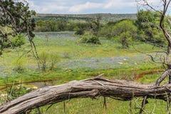 Teksas wzgórza kraju Wildflowers Fotografia Royalty Free