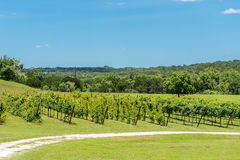 Teksas wzgórza kraju winnica Fotografia Stock