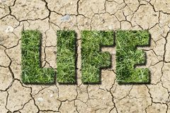 Tekst kształtował trawy dorośnięcie od suchej łaty ziemia Fotografia Royalty Free