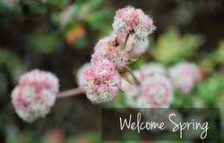 Tekst Mile widziany wiosna Outdoors Fotografia Royalty Free