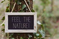 Teksta odczucie natura w drzewie Fotografia Royalty Free