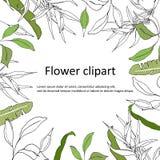 Tekstframe met groene en contourbladeren Contour Clipart voor gebruik in ontwerp Groene prentbriefkaaraffiche voor groeten, uitno vector illustratie