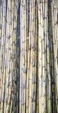 Tekstura żółte płochy suszy jako bariera Zdjęcia Stock