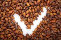Tekstura acorns zdjęcia royalty free