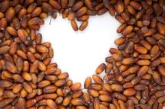 Tekstura acorns obrazy stock