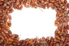 Tekstura acorns Fotografia Royalty Free