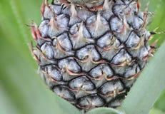 Tekstura ananasa wzoru tło Zdjęcie Stock