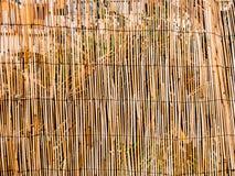 Tekstura bambus Cienieje kije tło bambus suchy jak może używać był Ogrodzenie robić bamb Obraz Royalty Free