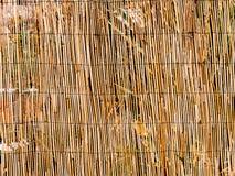 Tekstura bambus Cienieje kije tło bambus suchy jak może używać był Ogrodzenie robić bamb Zdjęcia Stock