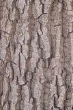Tekstura barkentyna drzewo Fotografia Royalty Free