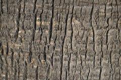 Tekstura barkentyna roślina abstrakcjonistycznego tło szczegółów tekstury palm tree bagażnika drewna zdjęcia stock