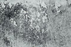 tekstura biała kredy ściana z rozwodem Obrazy Royalty Free