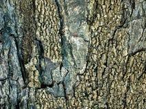 Tekstura brown drzewna barkentyna zdjęcia stock