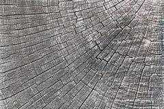 Tekstura dębowego drewna sekcja zdjęcia royalty free
