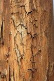 Tekstura drewno zdjęcie royalty free