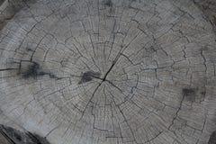 Tekstura drewno odcinał Obraz Royalty Free