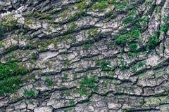 Tekstura drewno przerastający z mech Zdjęcie Royalty Free
