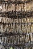 Tekstura drzewko palmowe bagażnik zdjęcia stock