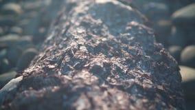 Tekstura drzewna barkentyna Tekstura drzewna barkentyna Drzewny bagażnik z szorstką sosny barkentyną zbiory wideo