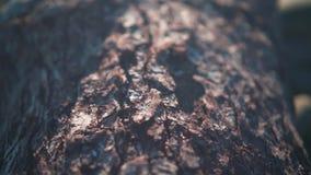 Tekstura drzewna barkentyna Tekstura drzewna barkentyna Drzewny bagażnik z szorstką sosny barkentyną zdjęcie wideo