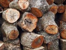 tekstura drzewni bagażniki Zdjęcie Stock