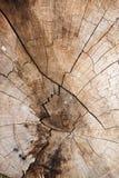 Tekstura drzewny fiszorek Obrazy Royalty Free