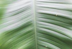 Tekstura drzewny liść Zielony liścia tło Obraz Royalty Free