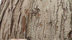 Tekstura Drzewny Narute 6 Obraz Royalty Free