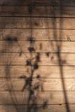 Tekstura drzewny wuth cień rośliny Zdjęcia Stock