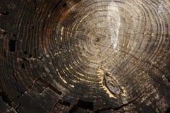 Tekstura drzewo Zdjęcie Stock