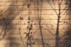 Tekstura drzewo z cieniem roślina Obraz Royalty Free