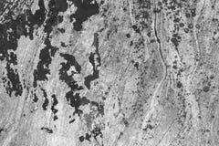 Tekstura granit i liszaj na nim Zdjęcie Royalty Free