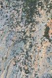Tekstura granit i liszaj na nim Obrazy Royalty Free