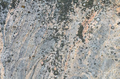 Tekstura granit i liszaj na nim Obraz Stock