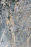 Tekstura granit i liszaj na nim Fotografia Stock