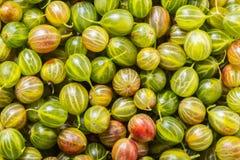 Tekstura jagoda agresty obrazy stock