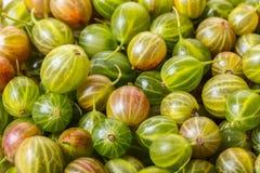 Tekstura jagoda agresty obraz stock